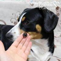Живые глазки для игрушек (кукол) в сравнение с глазом собаки